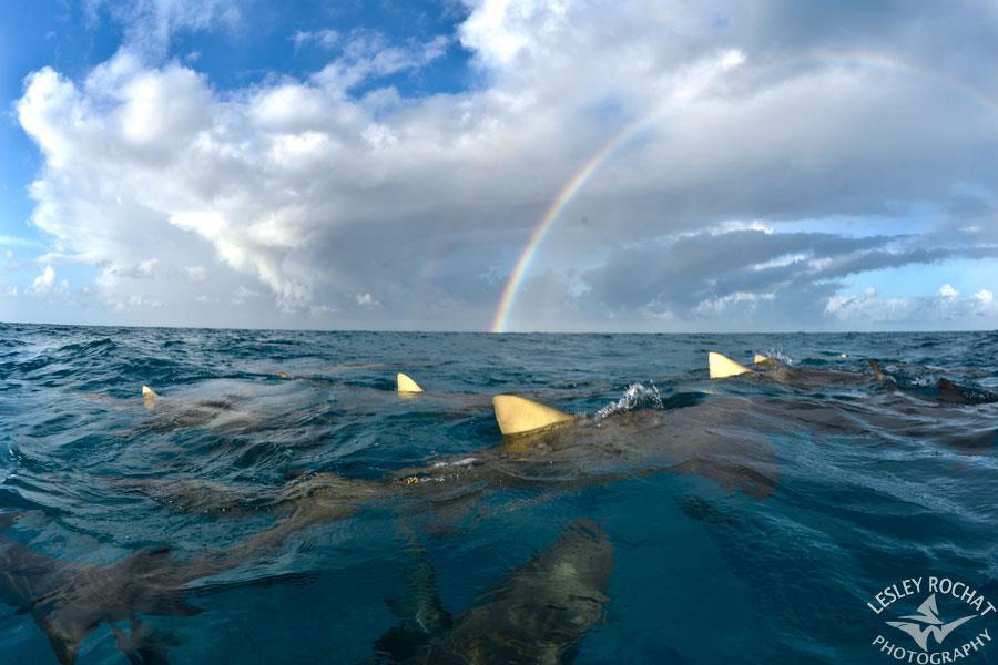 Shark Warrior Lesley Rochat