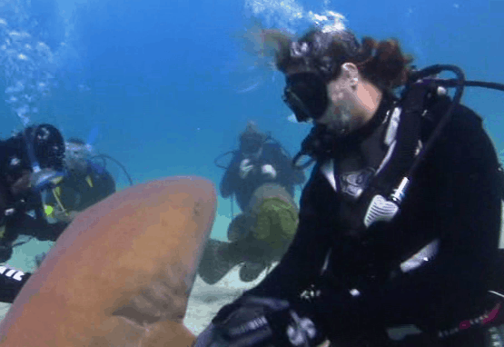 whispering to a shark - Shark Whisperer Sara Brenes
