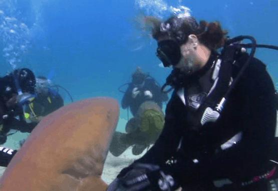 Shark Whisperer Sara Brenes