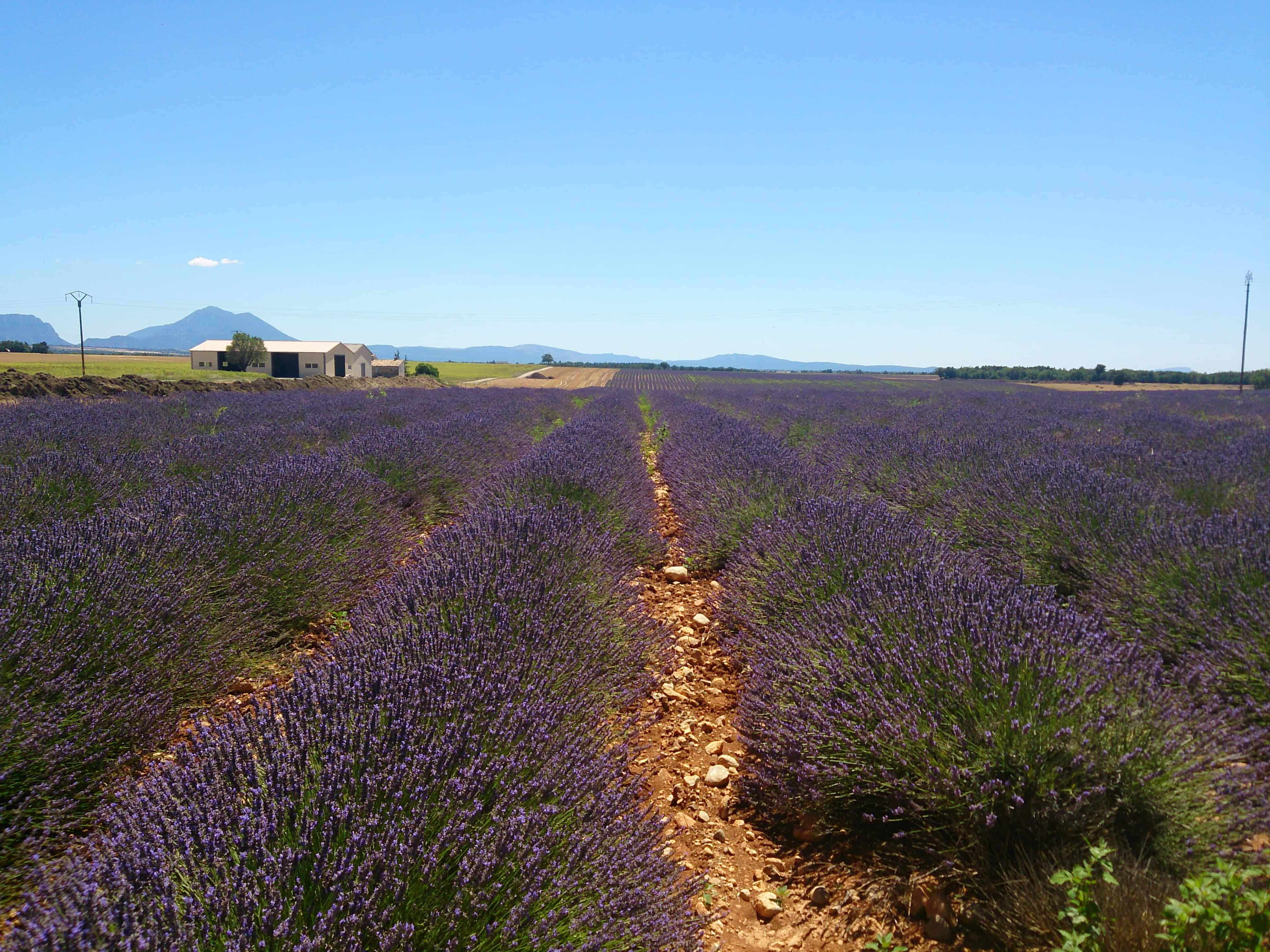 Road Trip along the Lavender Route in France
