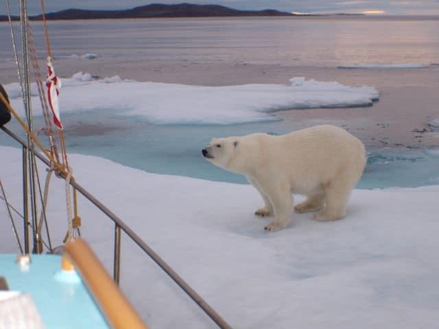 Eisbär auf Scholle Foto: Claudia und Jürgen Kirchberger