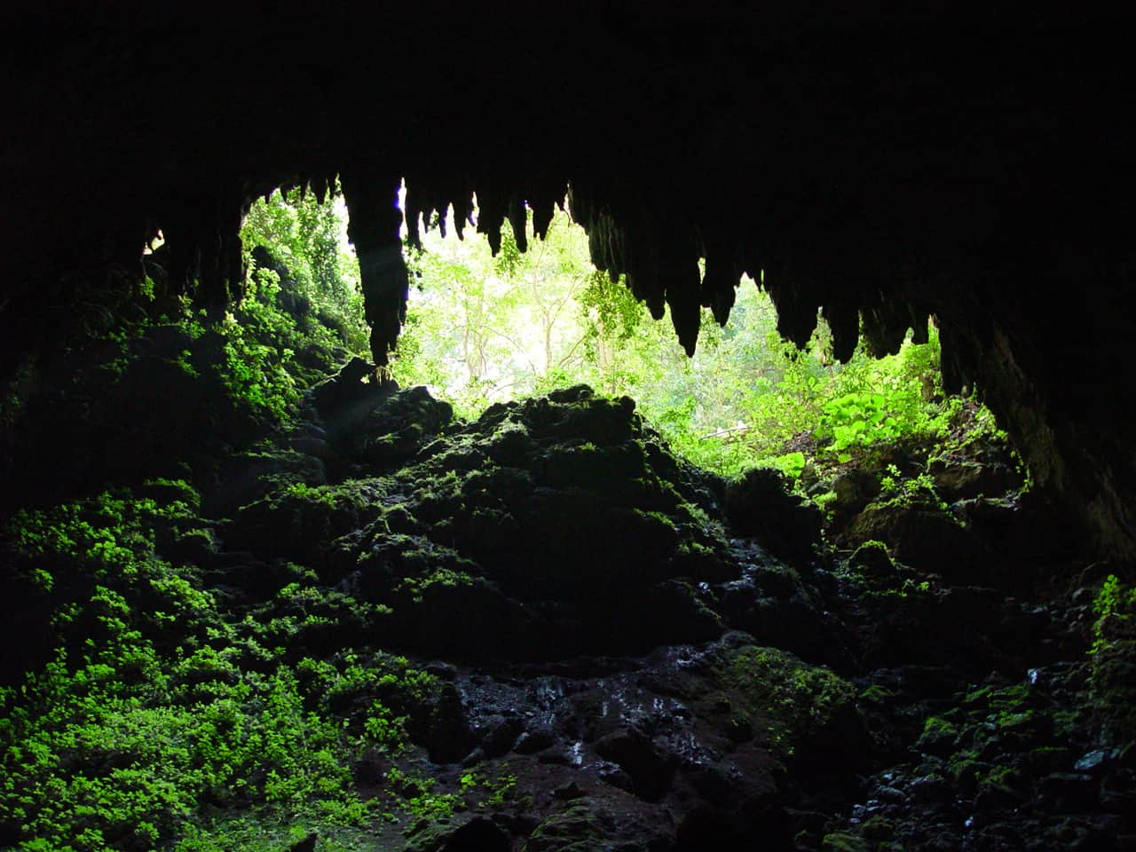 Camuy Caves - A Guide To The Hidden Puerto Rico Caves