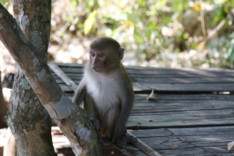 Mr. Monkey and Mrs. Bird - Eine traurige Geschichte aus Laos