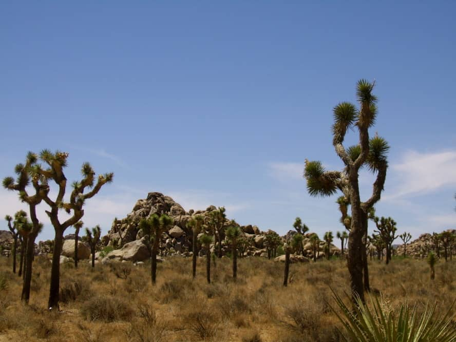 California Joshua Tree National Park