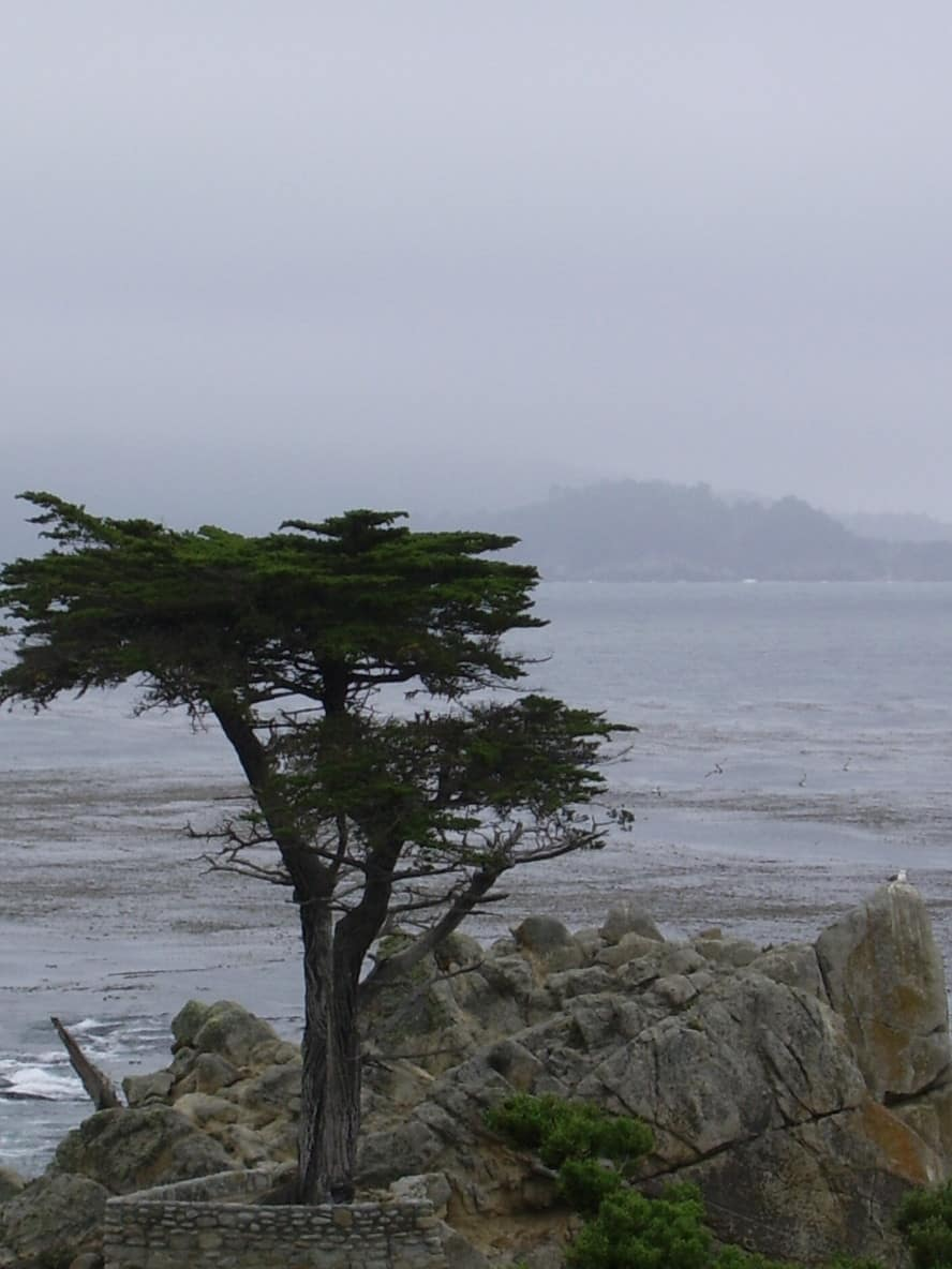 Lone Cypress 17 Mile Drive California