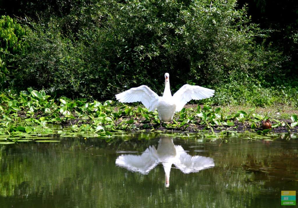 Wildlife along the Saone River
