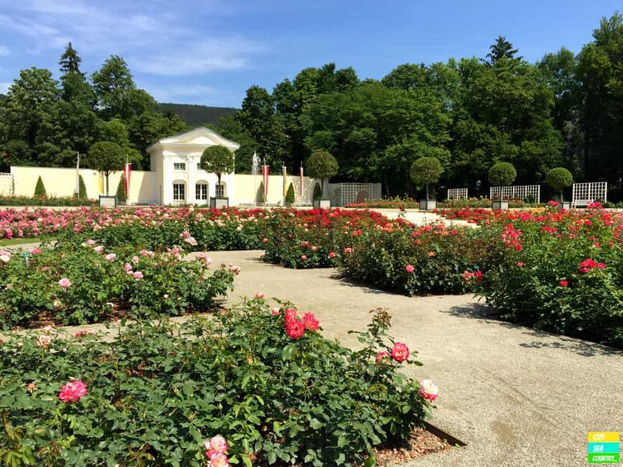 The Rosarium, a garden full of roses in the Doblhoffpark in Baden.