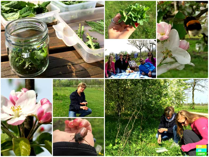 Herbs and picnic at the Vila Vita Pannonia