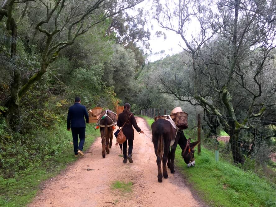 Quinta do Pisao Cascais Portugal