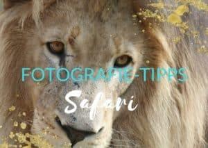Fotografieren auf Safaris: Die wichtigsten Tipps