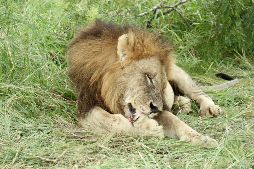 The Big Five: Luxury Safari & Game Drive in South Africa (Kruger)