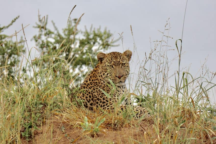Meeting the Big Five: Luxury Safari in South Africa