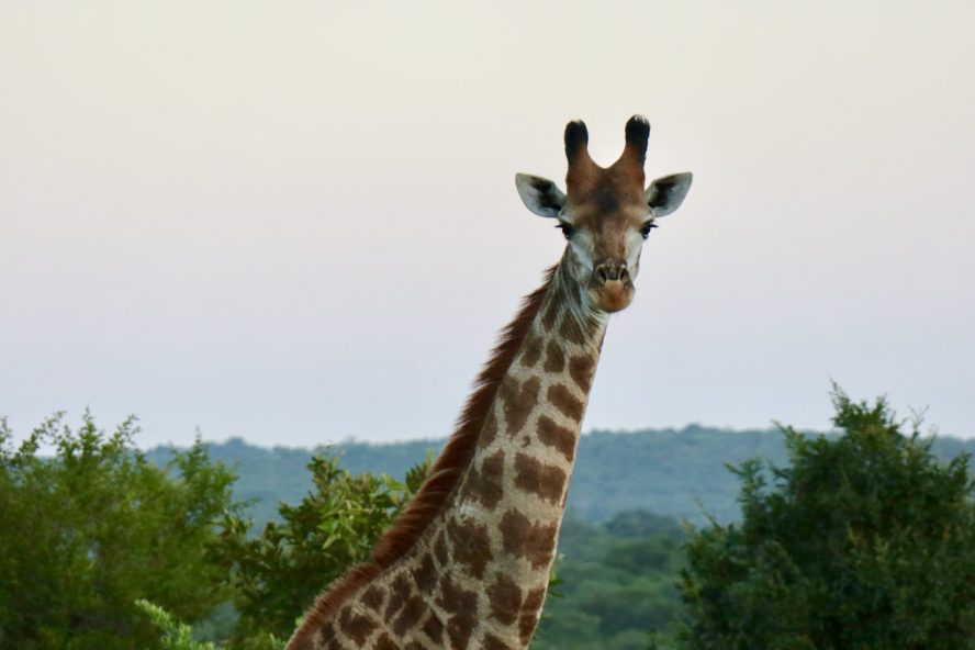 Luxury Safari and Game Drive in South Africa