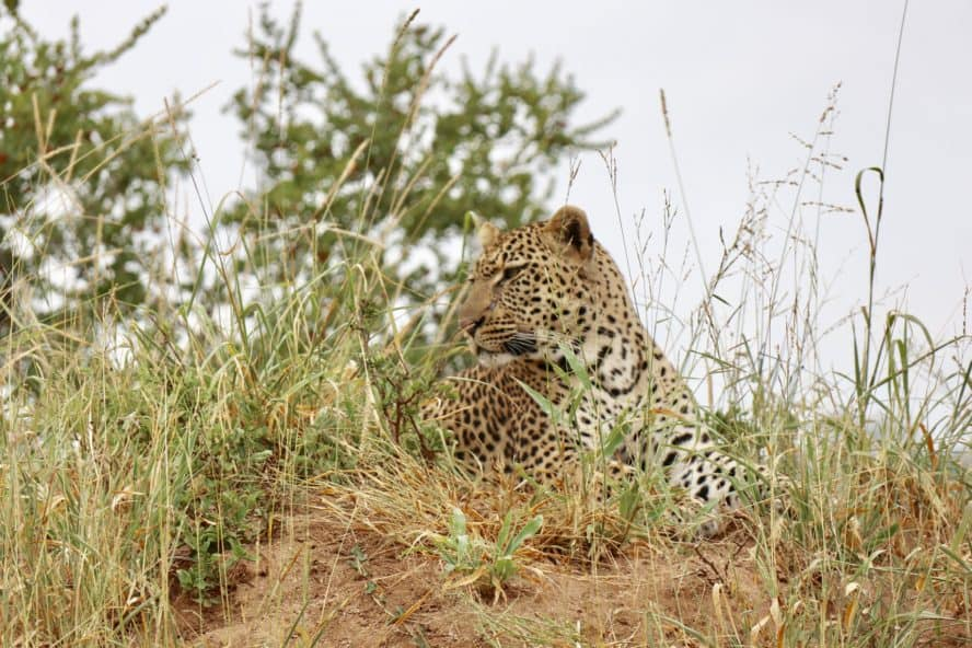 The Big Five: Luxury Safari in South Africa (Kruger National Park)