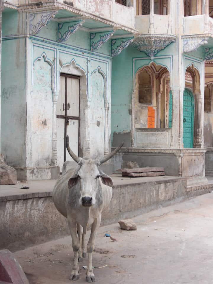 Reisevorbereitung Indien: Visum, Packen und Co.