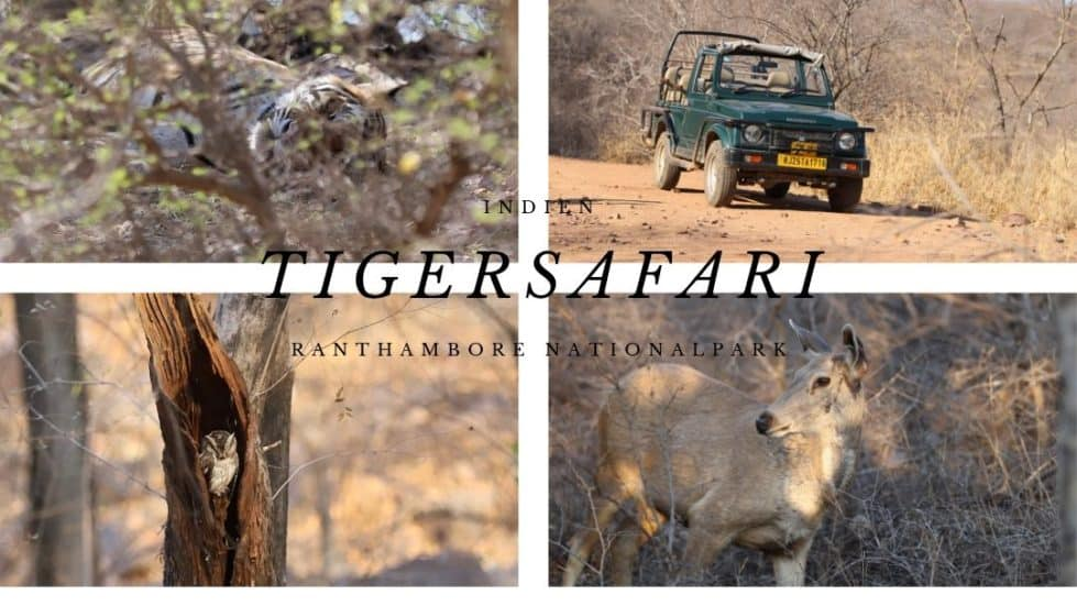 Indien: Auf Tiger Safari im Ranthambore Nationalpark