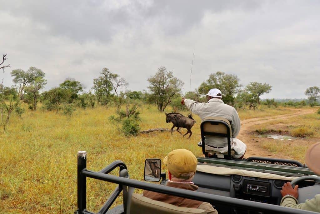 Südafrika Safari planen: Infos & Tipps zu Parks, Lodges, Reisezeit, Kosten...