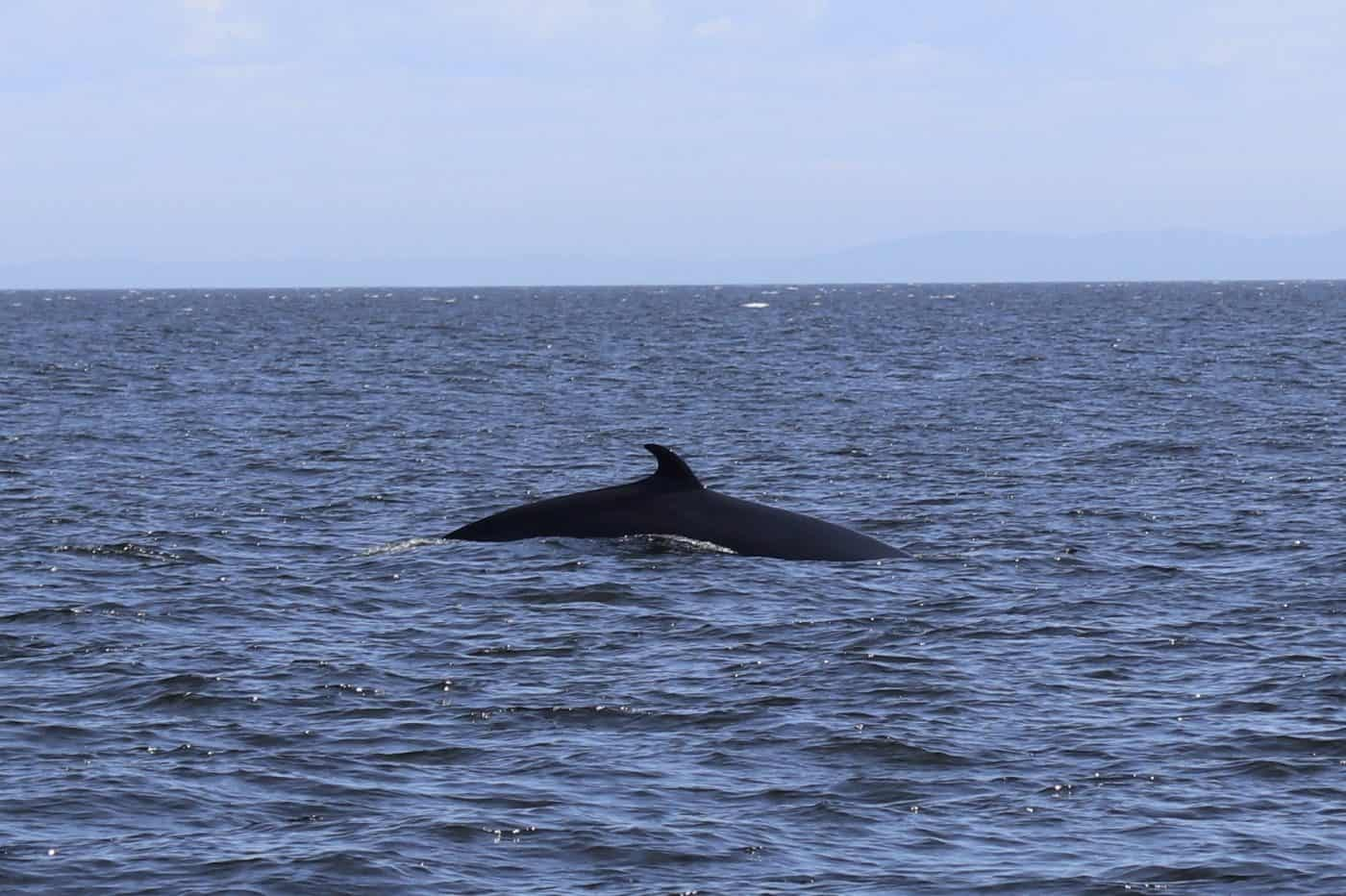 Guide To Whale Watching in Tadoussac, Canada
